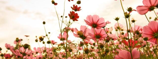 flowers 331